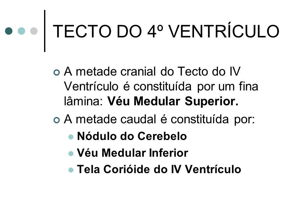 TECTO DO 4º VENTRÍCULO A metade cranial do Tecto do IV Ventrículo é constituída por um fina lâmina: Véu Medular Superior.