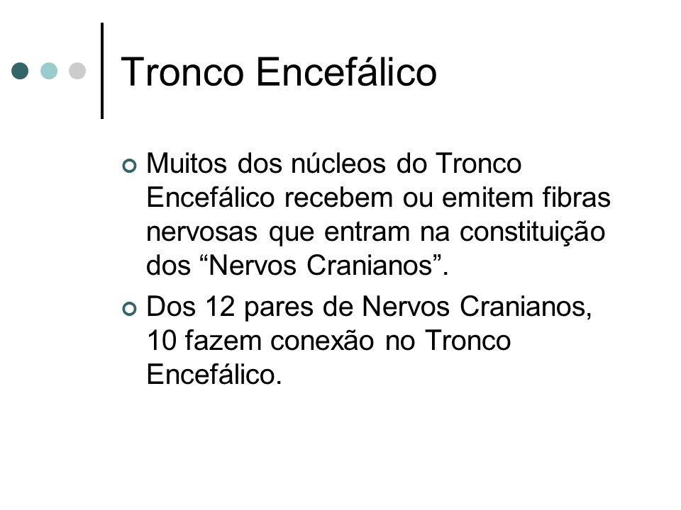Tronco Encefálico Muitos dos núcleos do Tronco Encefálico recebem ou emitem fibras nervosas que entram na constituição dos Nervos Cranianos .