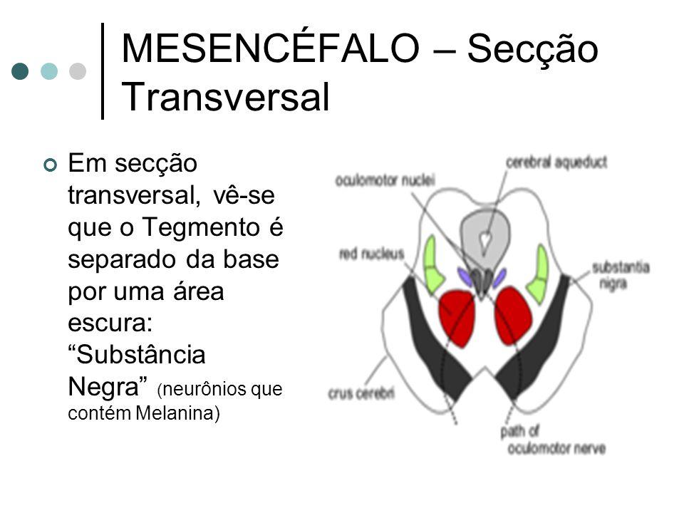 MESENCÉFALO – Secção Transversal