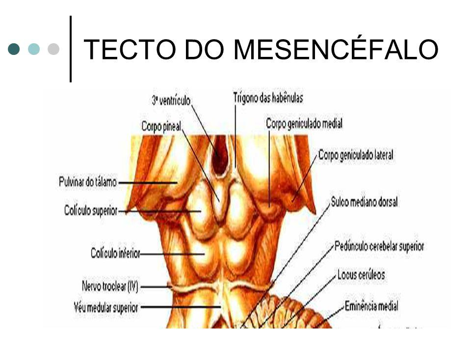 TECTO DO MESENCÉFALO