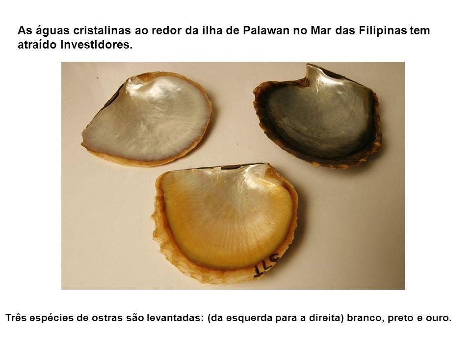 As águas cristalinas ao redor da ilha de Palawan no Mar das Filipinas tem atraído investidores.