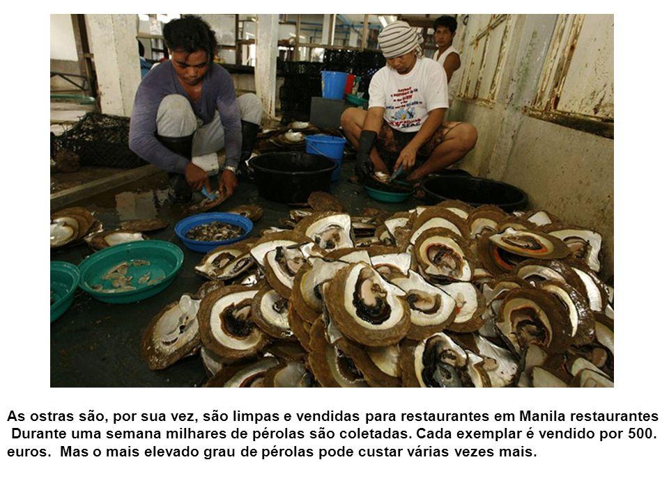 As ostras são, por sua vez, são limpas e vendidas para restaurantes em Manila restaurantes