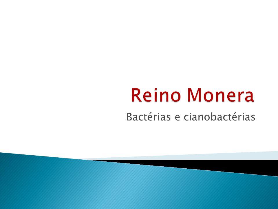 Bactérias e cianobactérias