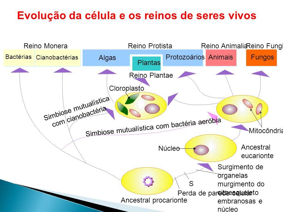 Simbiose mutualística com cianobactéria