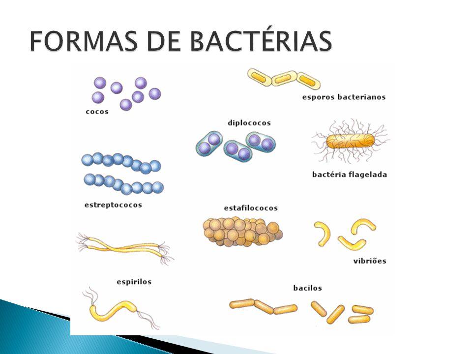FORMAS DE BACTÉRIAS