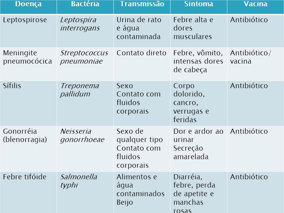 Doença Bactéria. Transmissão. Sintoma. Vacina. Leptospirose. Leptospira interrogans. Urina de rato e água contaminada.