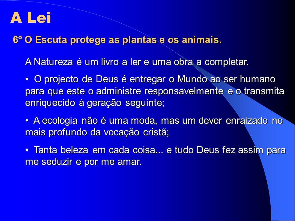 A Lei 6º O Escuta protege as plantas e os animais.