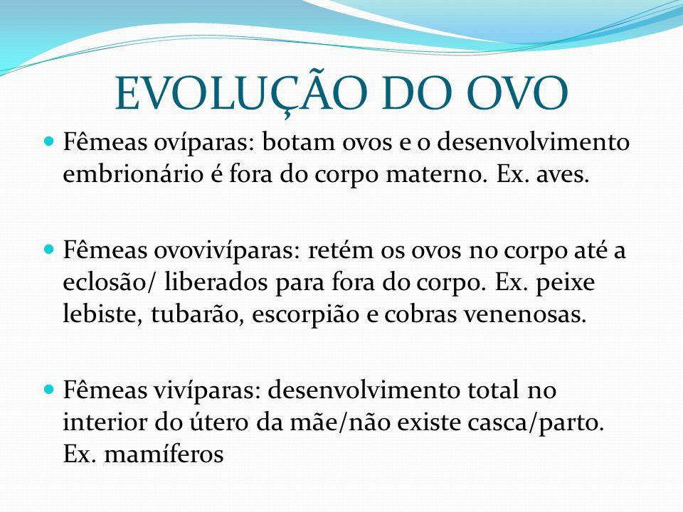 EVOLUÇÃO DO OVO Fêmeas ovíparas: botam ovos e o desenvolvimento embrionário é fora do corpo materno. Ex. aves.