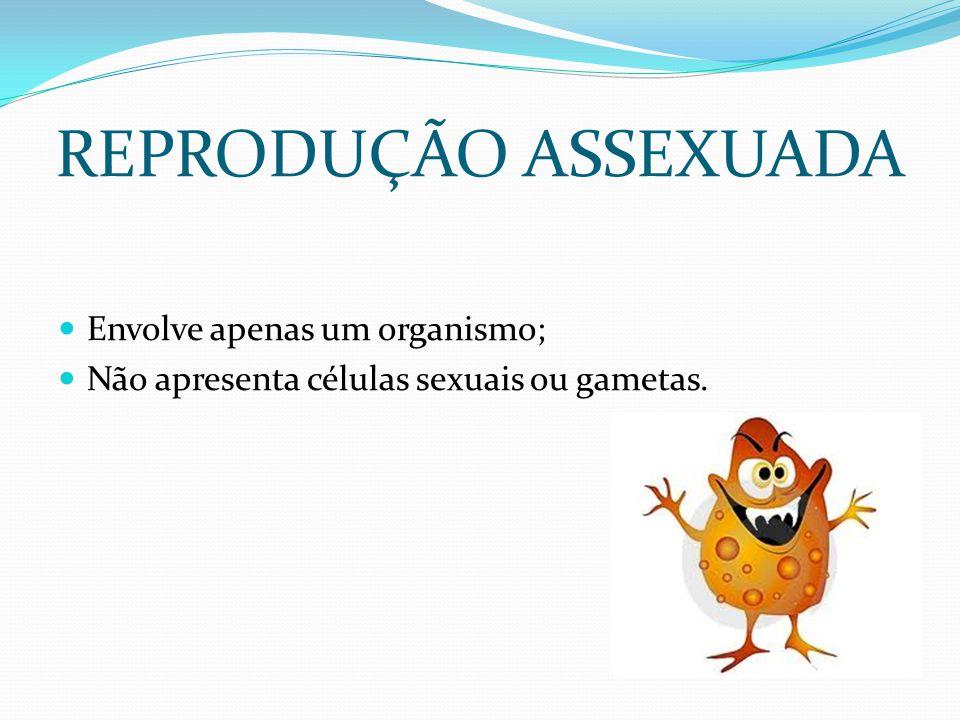 REPRODUÇÃO ASSEXUADA Envolve apenas um organismo;