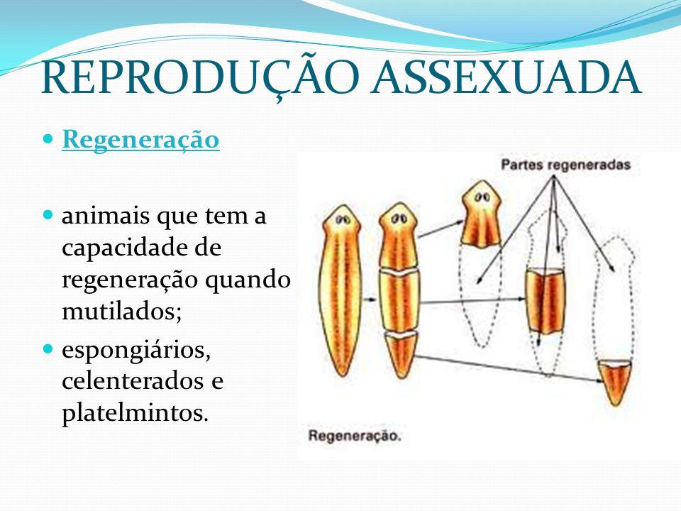 REPRODUÇÃO ASSEXUADA Regeneração