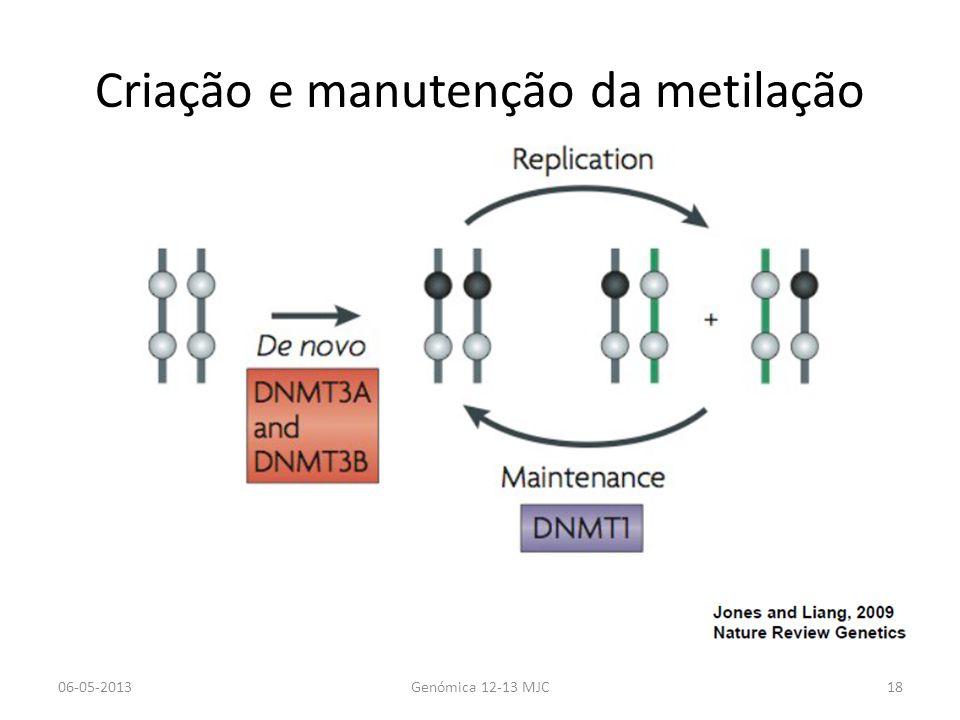 Criação e manutenção da metilação
