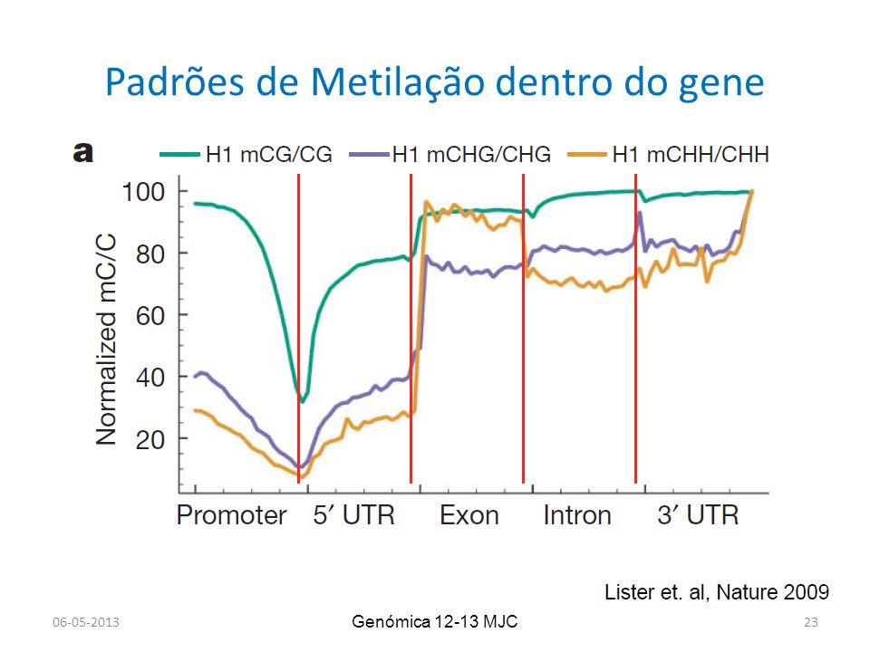 Padrões de Metilação dentro do gene