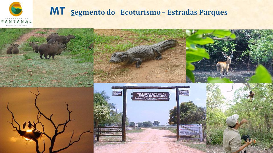 MT Segmento do Ecoturismo – Estradas Parques