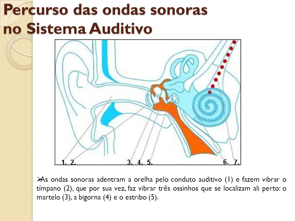 Percurso das ondas sonoras no Sistema Auditivo