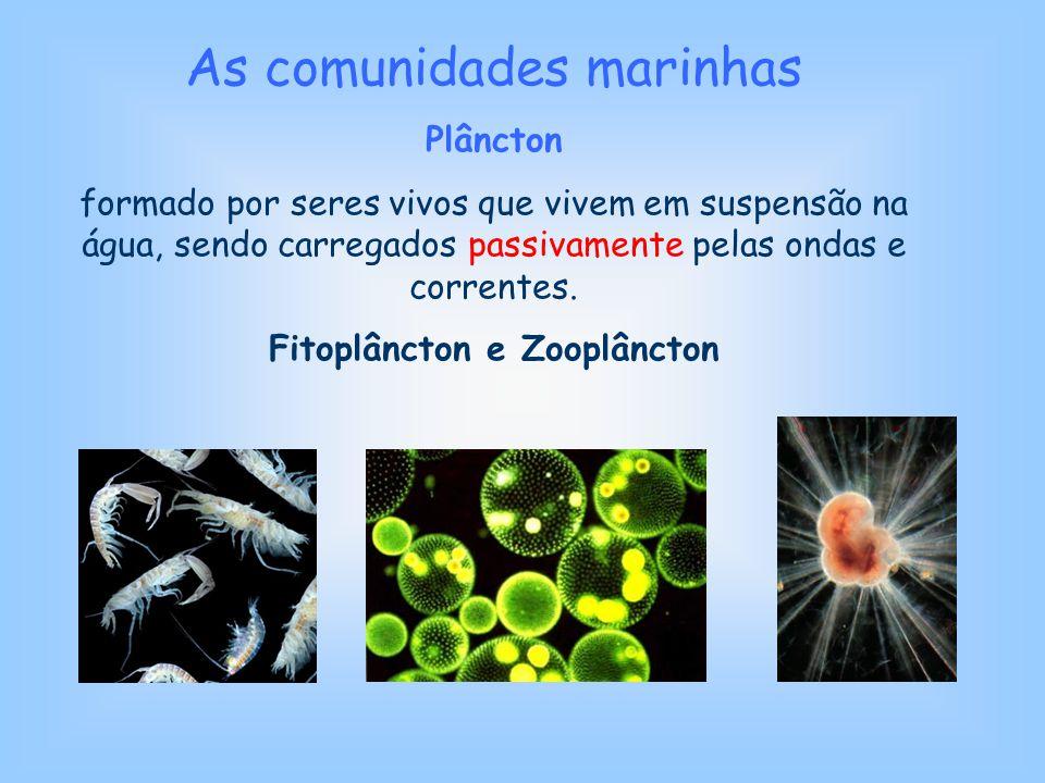 Fitoplâncton e Zooplâncton