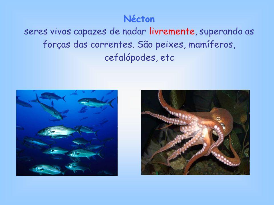Nécton seres vivos capazes de nadar livremente, superando as forças das correntes.