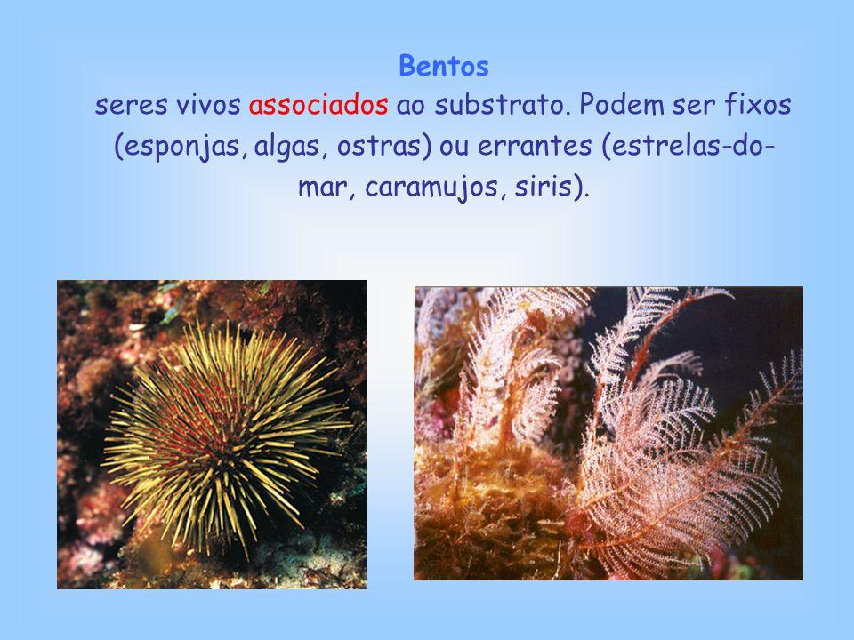 Bentos seres vivos associados ao substrato.