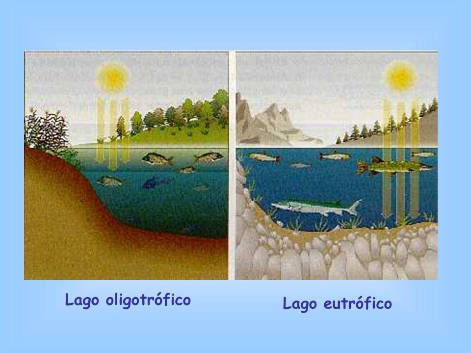 Lago oligotrófico Lago eutrófico