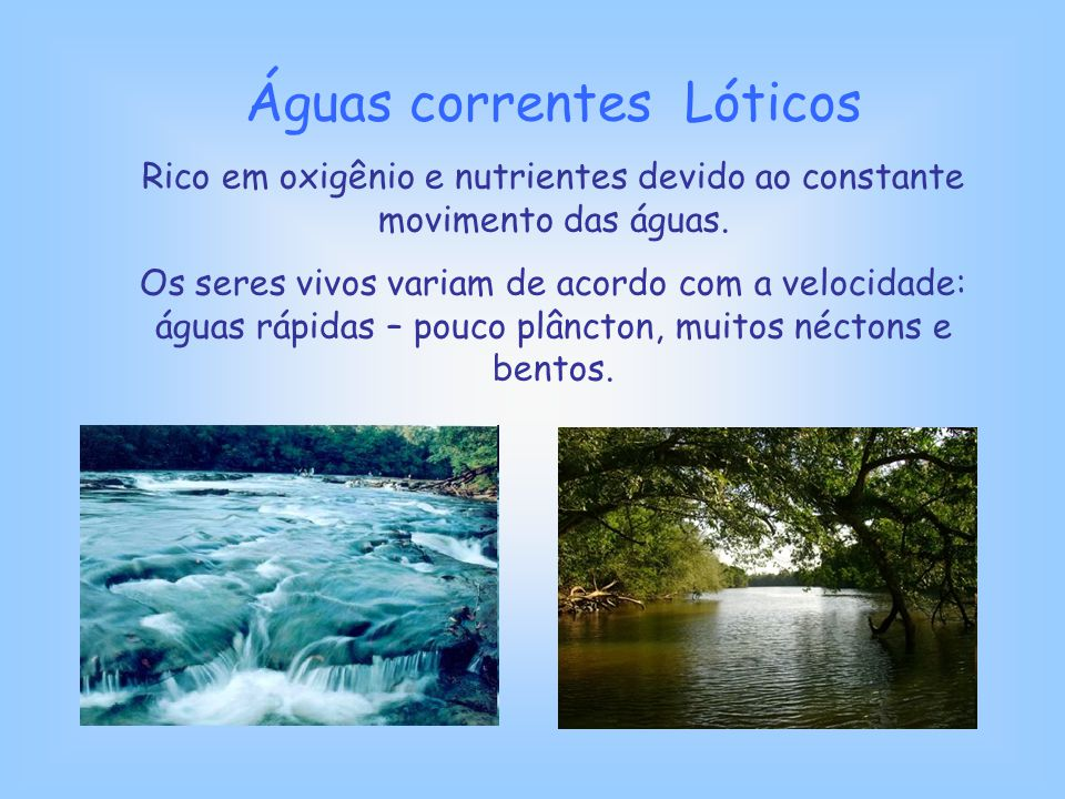 Águas correntes Lóticos