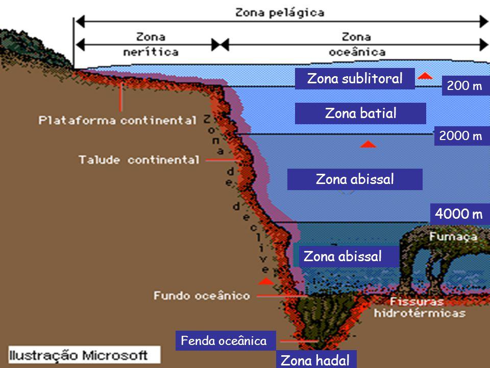 Zona sublitoral Zona batial Zona abissal 4000 m Zona abissal