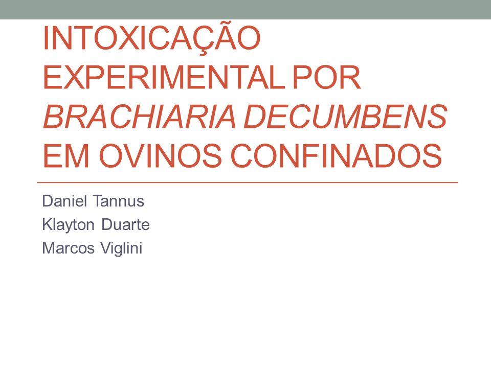 Intoxicação experimental por Brachiaria decumbens em ovinos confinados