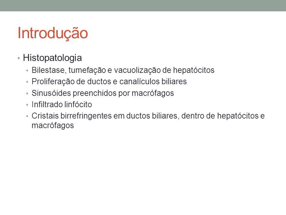 Introdução Histopatologia