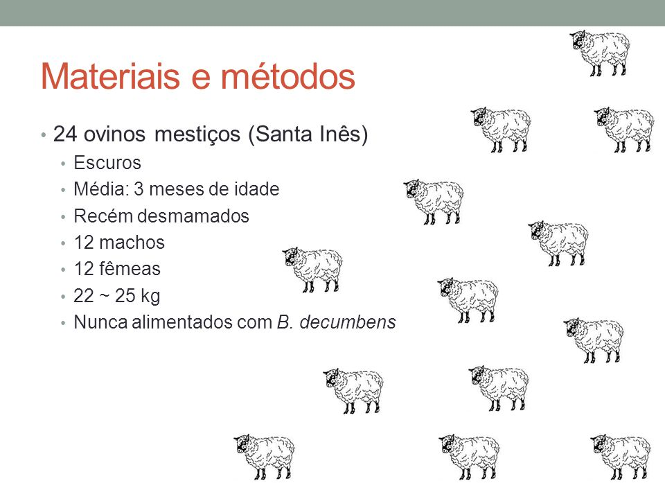 Materiais e métodos 24 ovinos mestiços (Santa Inês) Escuros