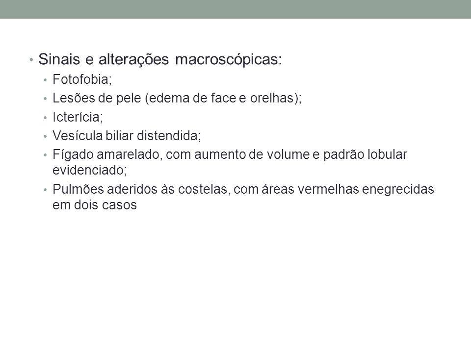 Sinais e alterações macroscópicas: