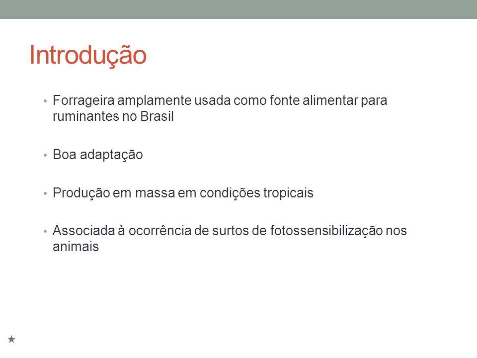 Introdução Forrageira amplamente usada como fonte alimentar para ruminantes no Brasil. Boa adaptação.