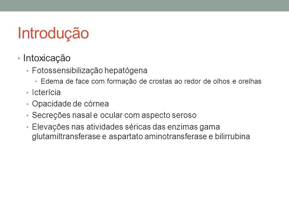 Introdução Intoxicação Fotossensibilização hepatógena Icterícia