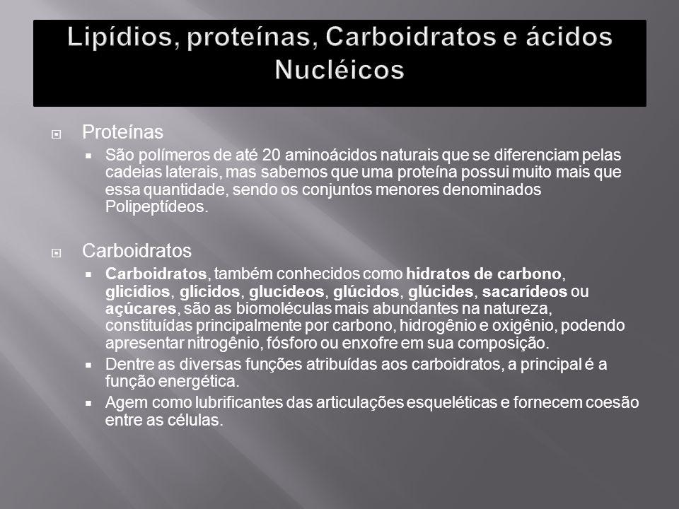 Lipídios, proteínas, Carboidratos e ácidos Nucléicos