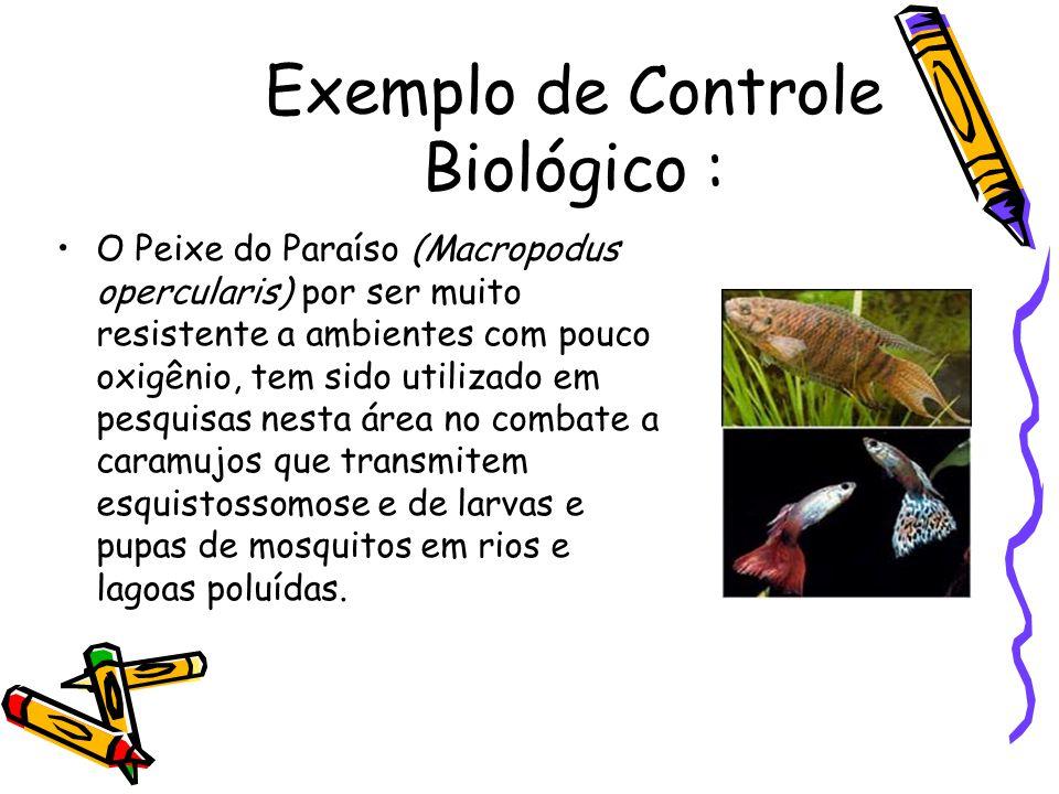 Exemplo de Controle Biológico :