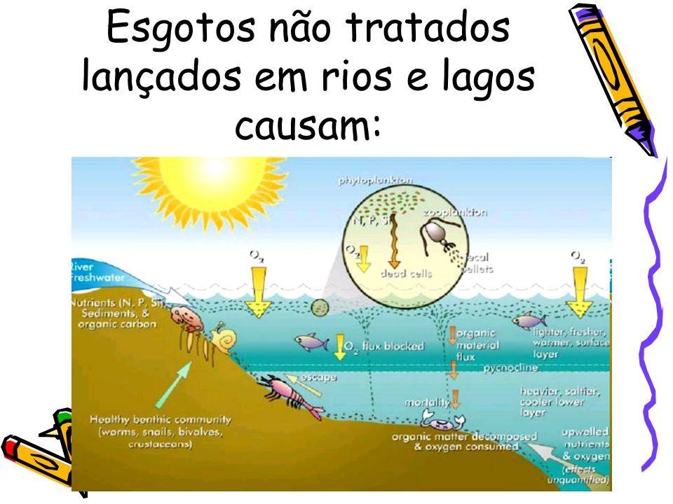 Esgotos não tratados lançados em rios e lagos causam: