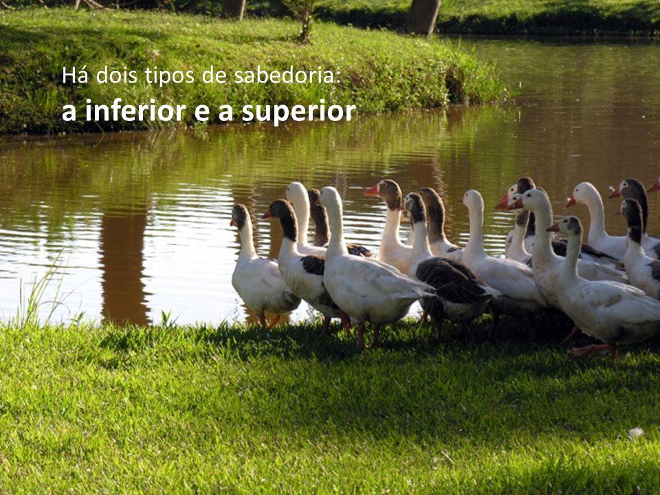 Há dois tipos de sabedoria: a inferior e a superior