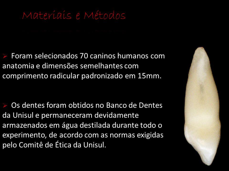 Materiais e Métodos Foram selecionados 70 caninos humanos com anatomia e dimensões semelhantes com comprimento radicular padronizado em 15mm.