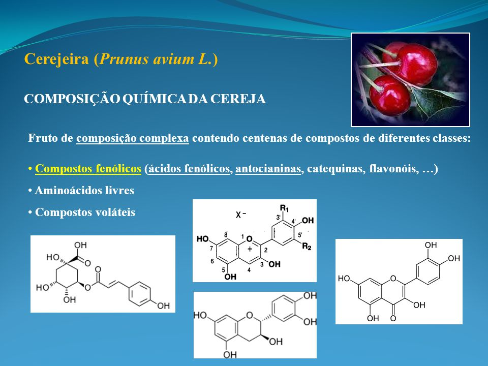 Cerejeira (Prunus avium L.)