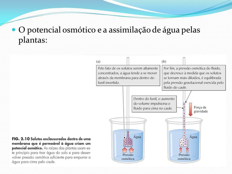 O potencial osmótico e a assimilação de água pelas plantas: