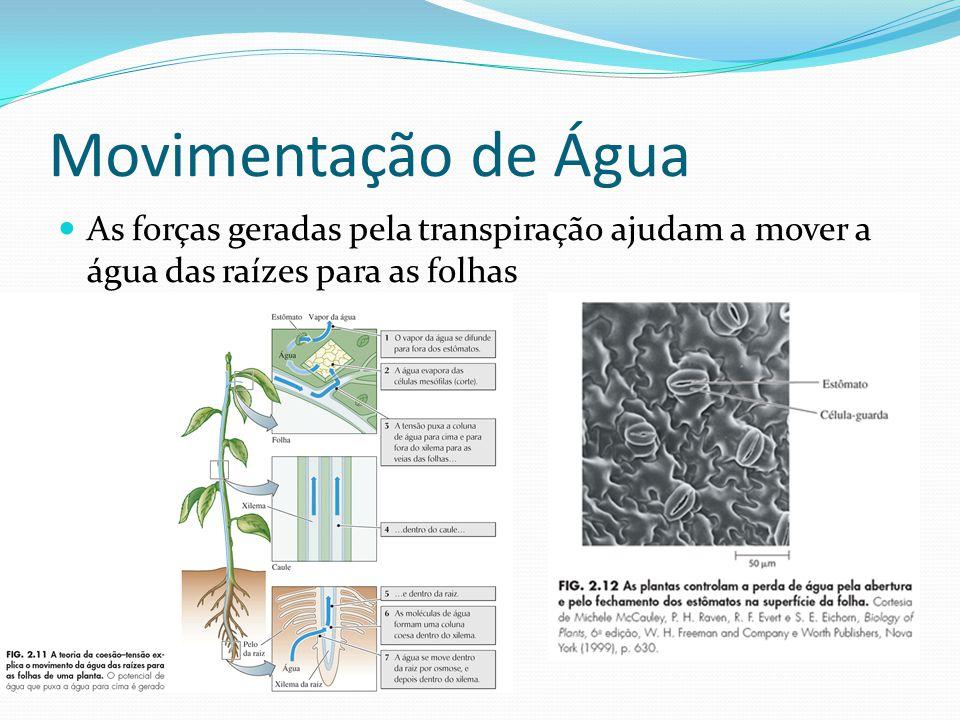 Movimentação de Água As forças geradas pela transpiração ajudam a mover a água das raízes para as folhas.