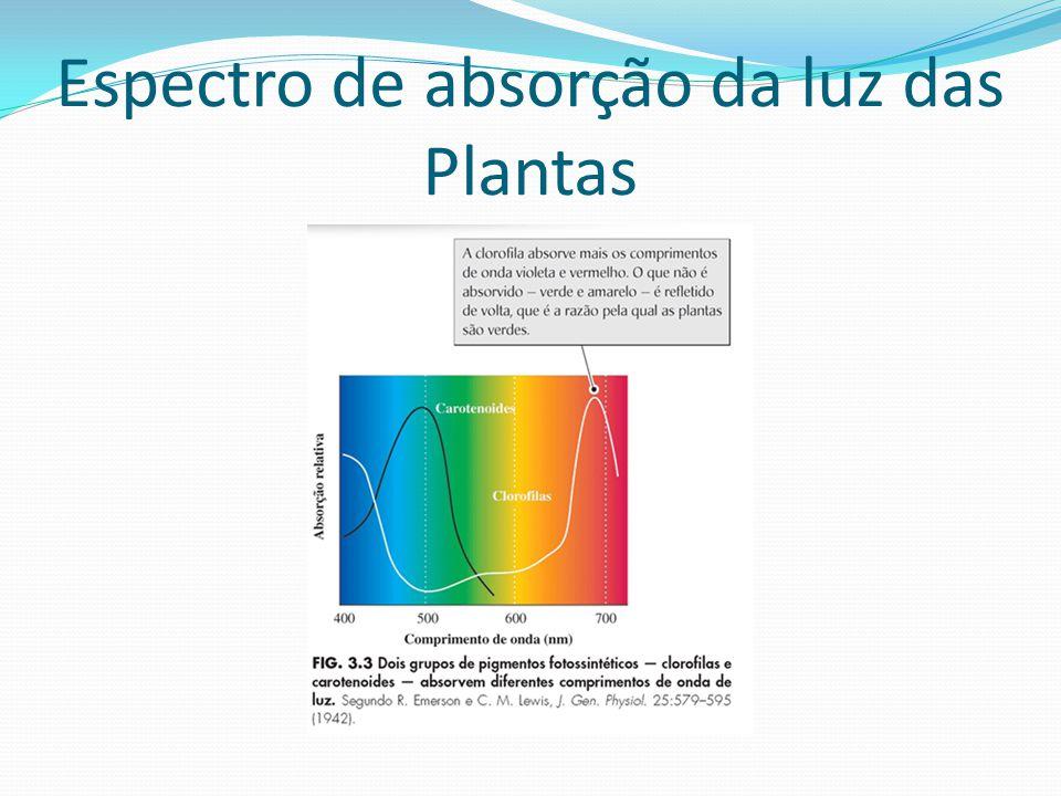 Espectro de absorção da luz das Plantas
