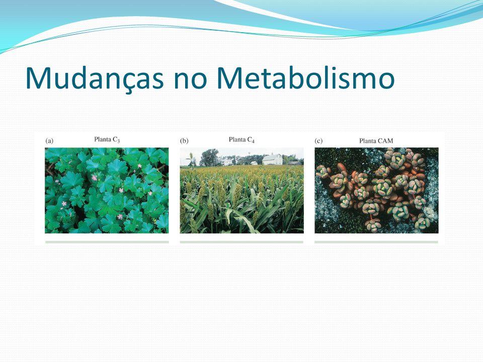 Mudanças no Metabolismo