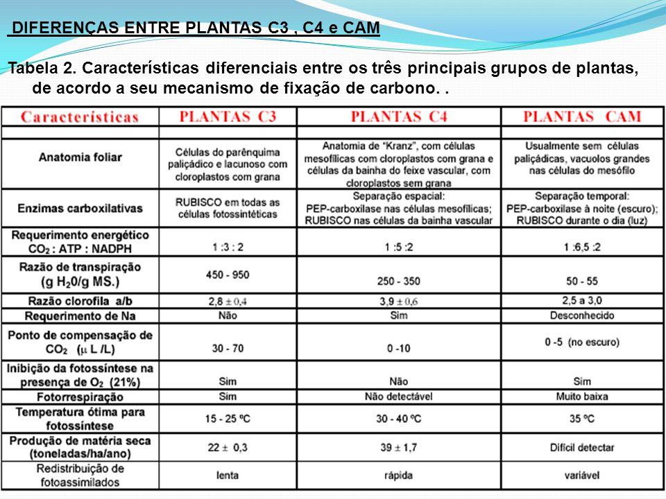 DIFERENÇAS ENTRE PLANTAS C3 , C4 e CAM