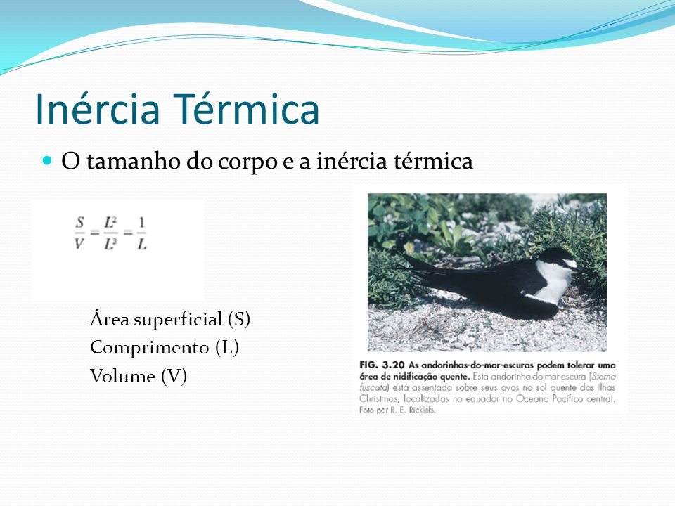 Inércia Térmica O tamanho do corpo e a inércia térmica