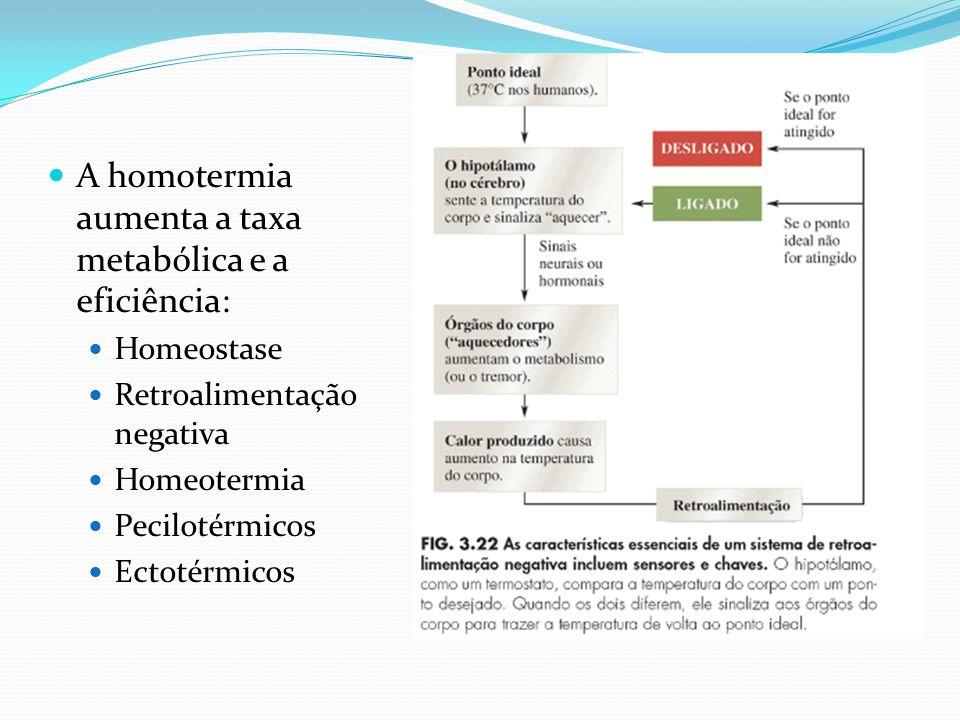 A homotermia aumenta a taxa metabólica e a eficiência: