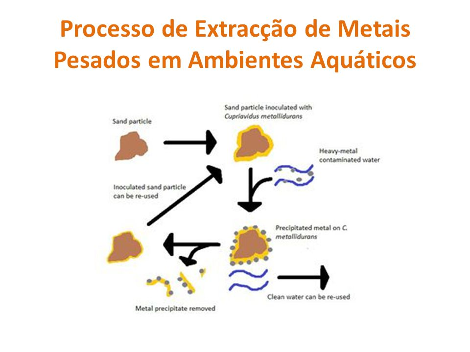 Processo de Extracção de Metais Pesados em Ambientes Aquáticos