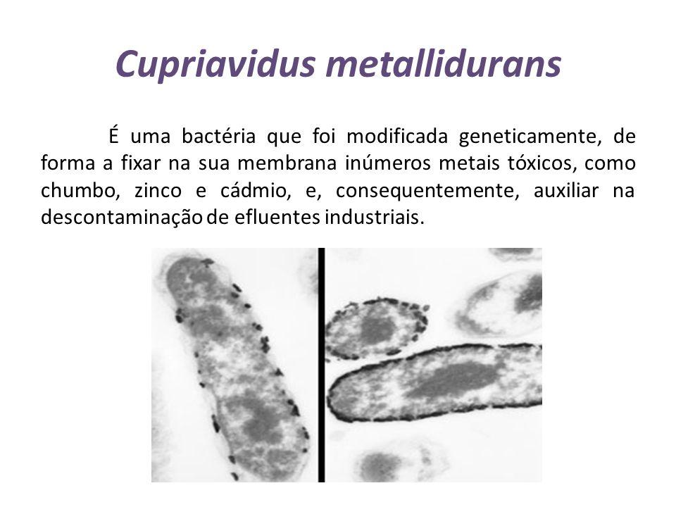 Cupriavidus metallidurans