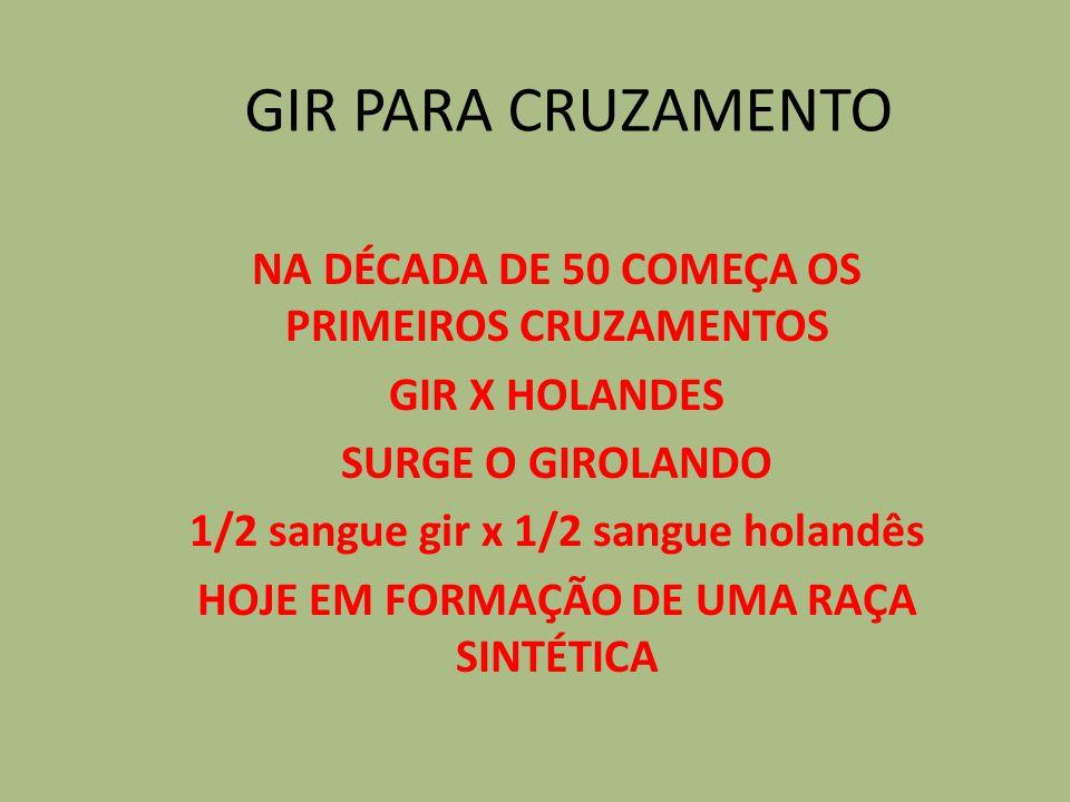 GIR PARA CRUZAMENTO NA DÉCADA DE 50 COMEÇA OS PRIMEIROS CRUZAMENTOS