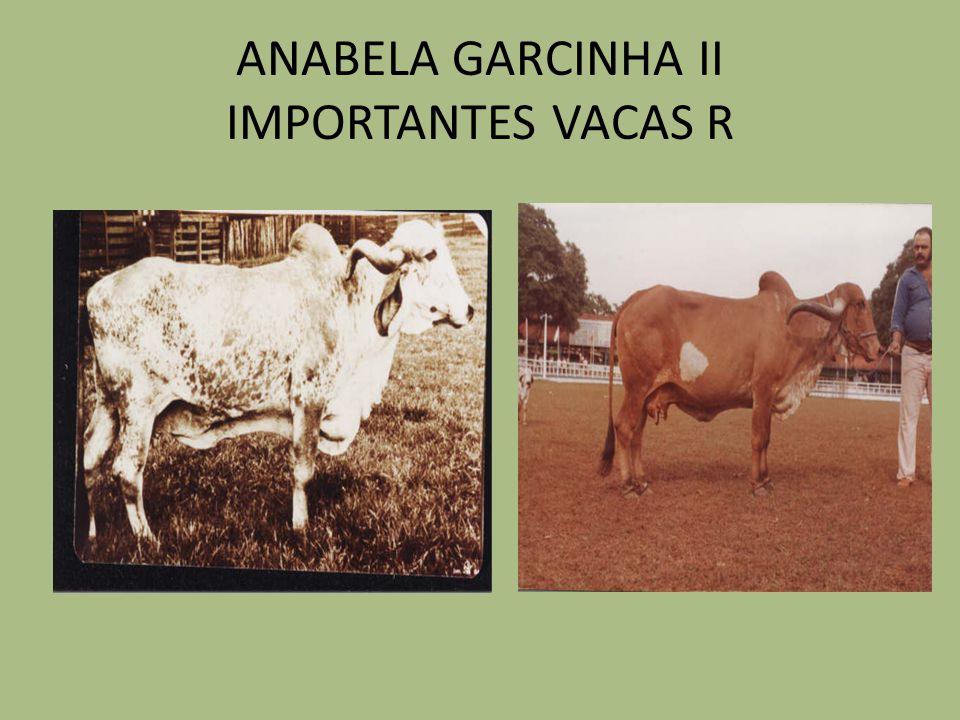 ANABELA GARCINHA II IMPORTANTES VACAS R