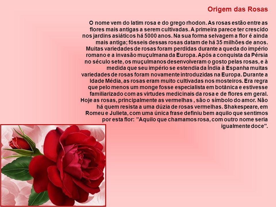 Origem das Rosas O nome vem do latim rosa e do grego rhodon