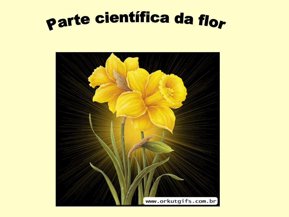 Parte científica da flor