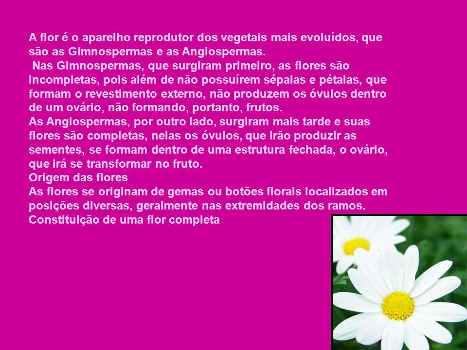 A flor é o aparelho reprodutor dos vegetais mais evoluídos, que são as Gimnospermas e as Angiospermas.